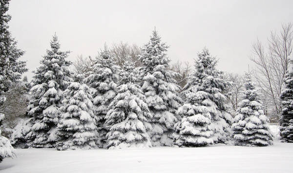 Photograph - Winter Copse by Wesley Elsberry