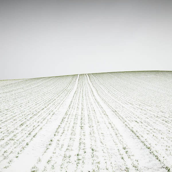 Grow Wall Art - Photograph - Winter Crop by Martin Rak