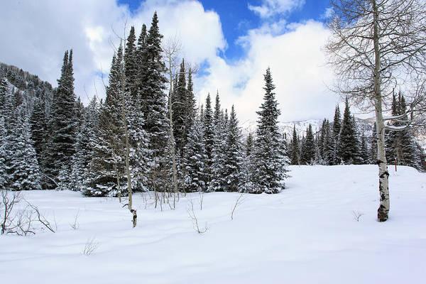Photograph - Winter by Darryl Wilkinson
