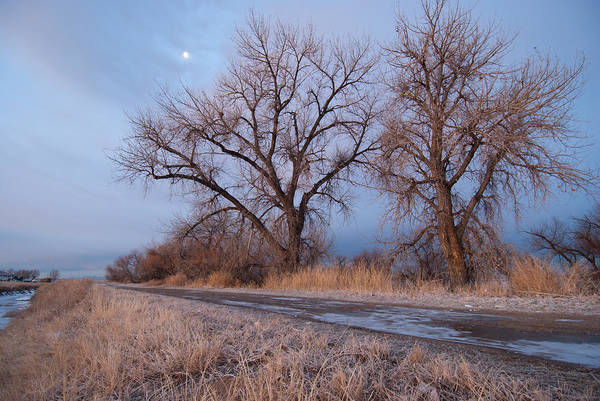 Photograph - Winter Dawn Moon And Tree Landscape by Cascade Colors