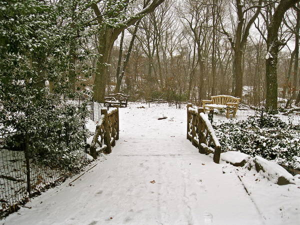 Photograph - Winter Day In The Park by Felix Zapata
