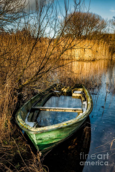 Moor Photograph - Winter Decay by Adrian Evans