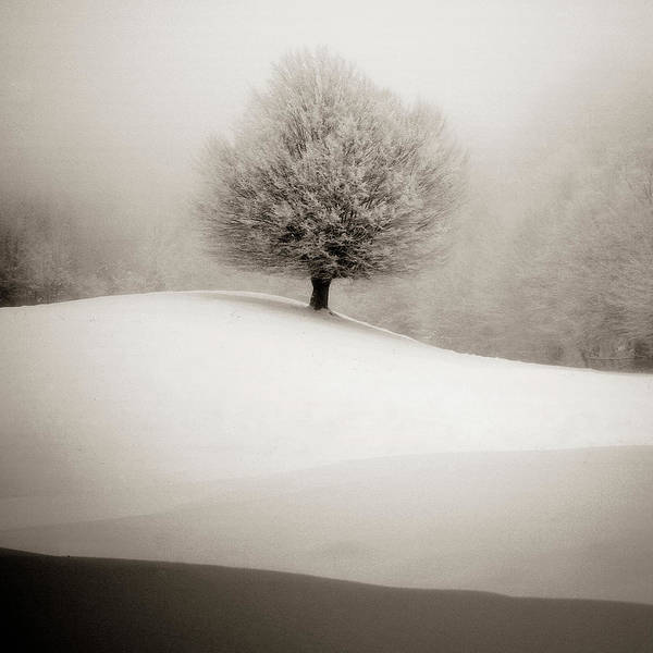 Foggy Photograph - Winter Degradee by