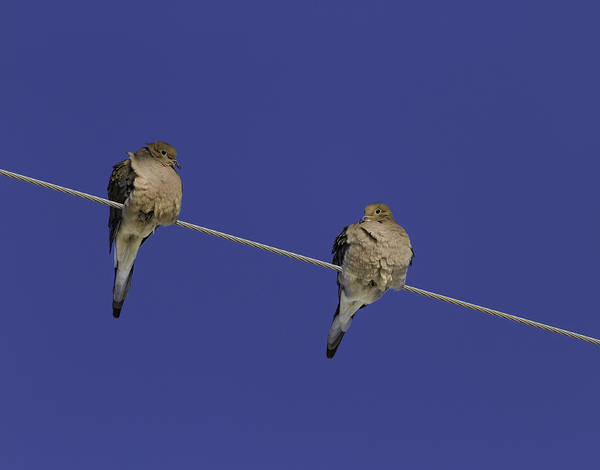 Wall Art - Photograph - Winter Doves by Thomas Young