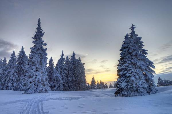 Photograph - Winter Evening by Ivan Slosar