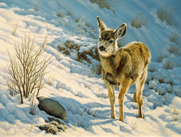 Fawn Painting - Winter Fawn - Mule Deer by Paul Krapf