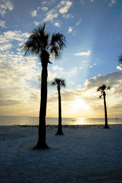 Photograph - Winter Florida Sunset by Beverly Stapleton