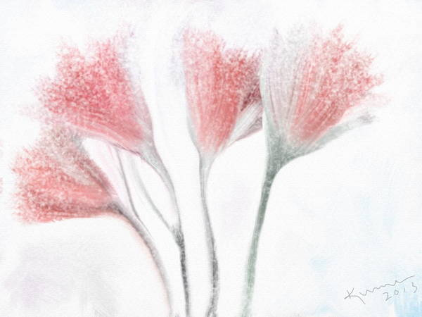 Ice Plant Digital Art - Winter Flowers by Kume Bryant