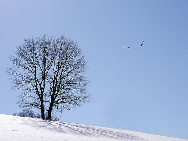 Photograph - Winter - Fly Past by Richard Reeve