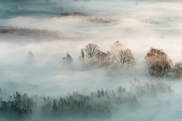 Wall Art - Photograph - Winter Fog by Marco Galimberti