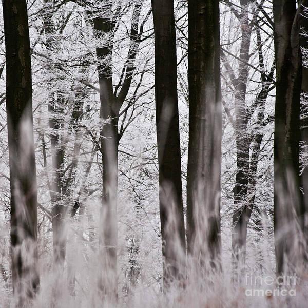 Photograph - Winter Forest 1 by Heiko Koehrer-Wagner