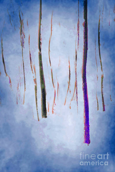 Photograph - Winter Forest Abstract by David Birchall