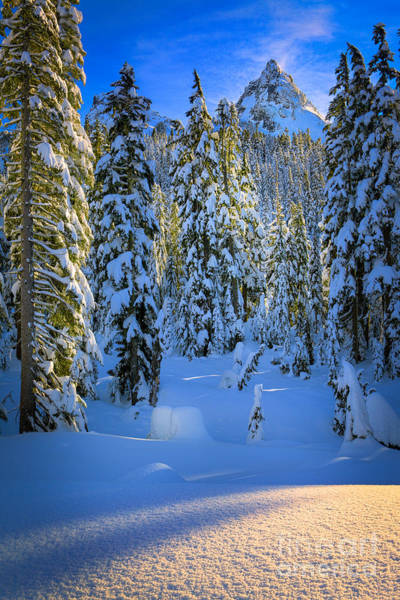 Snowshoe Photograph - Winter Forest by Inge Johnsson