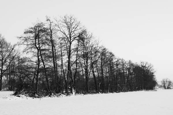 Photograph - Winter Forest by Ivan Slosar