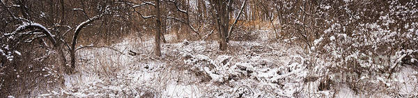 Wall Art - Photograph - Winter Forest Panorama by Elena Elisseeva