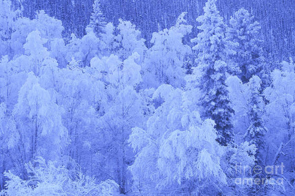 Photograph - Winter Frost by Mark Newman