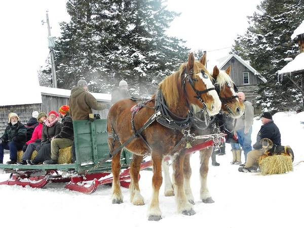 Photograph - Winter Fun by Peggy  McDonald