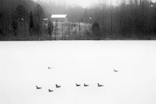 Photograph - Winter Geese 2 Bw by Patrick M Lynch