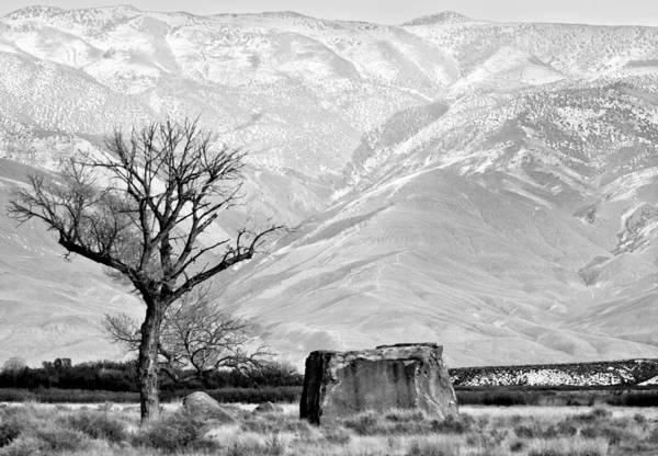 Photograph - Winter by Gigi Ebert
