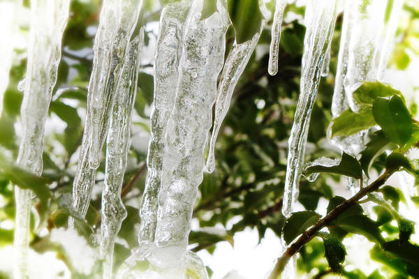 Photograph - Winter Glass by Scott Hovind
