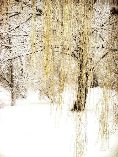 Photograph - Winter Gold by Julie Palencia