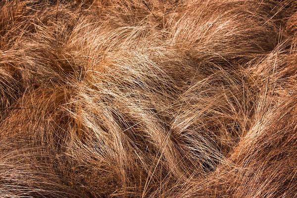 Photograph - Winter Grass by Tom Singleton