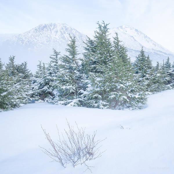 Photograph - Winter Haze by Tim Newton