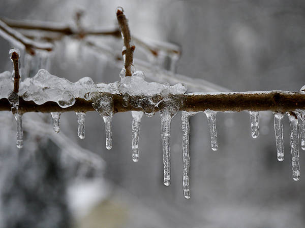Photograph - Winter - Ice Drops by Richard Reeve