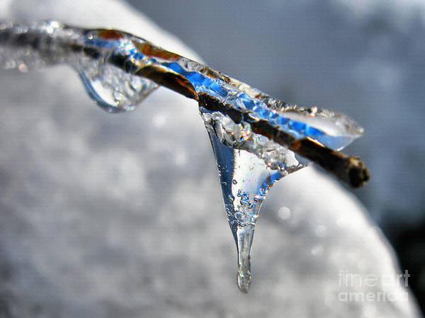 Photograph - Winter Icicle Formations by Daliana Pacuraru