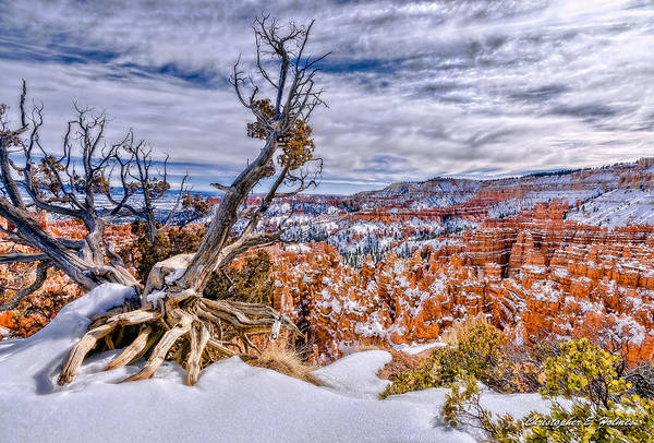 Photograph - Winter In Bryce Canyon by Christopher Holmes