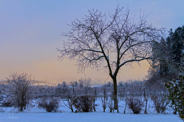 Photograph - Winter In Color by Raffaella Lunelli