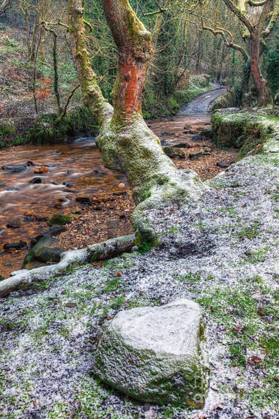 Wall Art - Photograph - Winter In The Woods by Adrian Evans