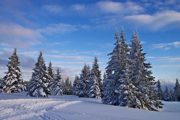 Photograph - Winter by Ivan Slosar