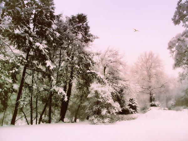 Wall Art - Photograph - Winter Woodland  by Jessica Jenney