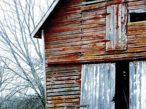 Photograph - Winter  by Jp Grace