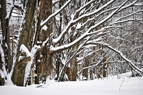 Photograph - Winter Landscape by Elena Elisseeva