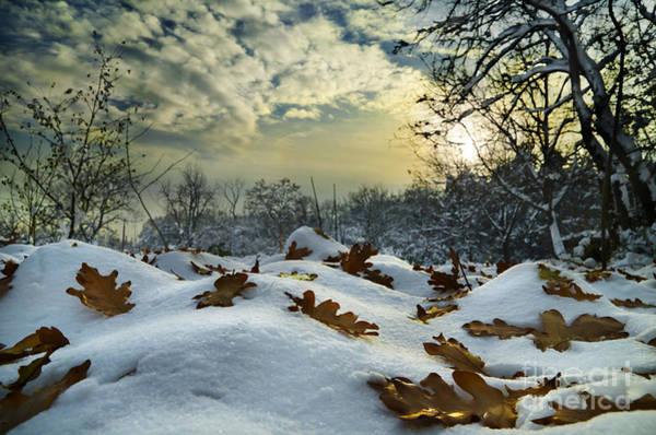 Pyrography - Winter Landscape by Jelena Jovanovic