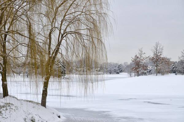 Photograph - Winter Landscape by Julie Palencia