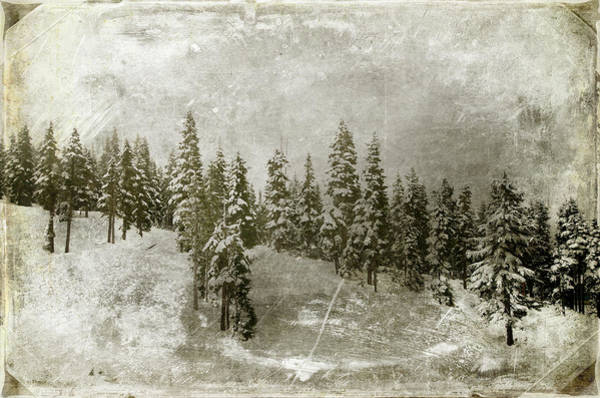 Photograph - Winter Landscape by Marilyn Wilson