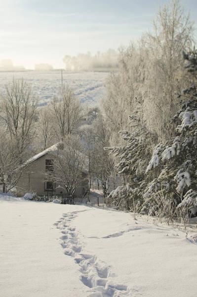 Christmass Photograph - Winterland by V Yurkevitch