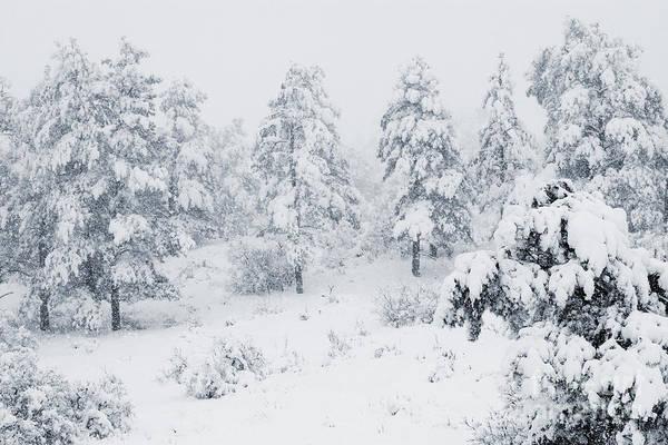 Photograph - Winter Landscapes by Steve Krull