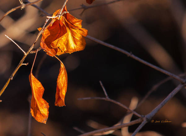 Photograph - Winter Leaf by Edward Peterson