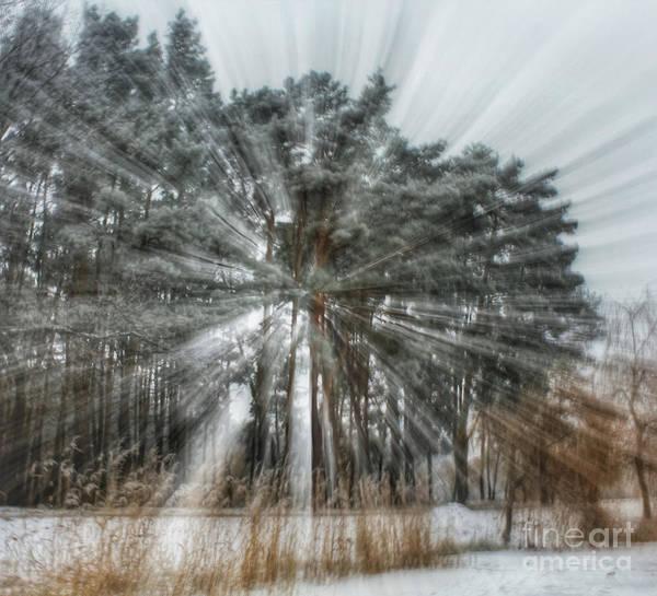 Winter Light In A Forest Art Print