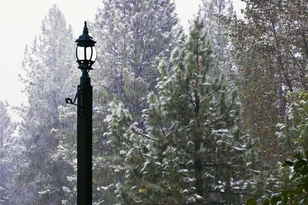 Photograph - Winter Light by Mick Burkey
