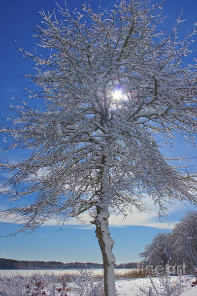 Photograph - Winter Magic by Amazing Jules