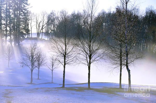 Photograph - Winter Magic by Randi Grace Nilsberg