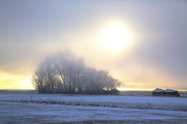 Photograph - Winter Mist by David Andersen