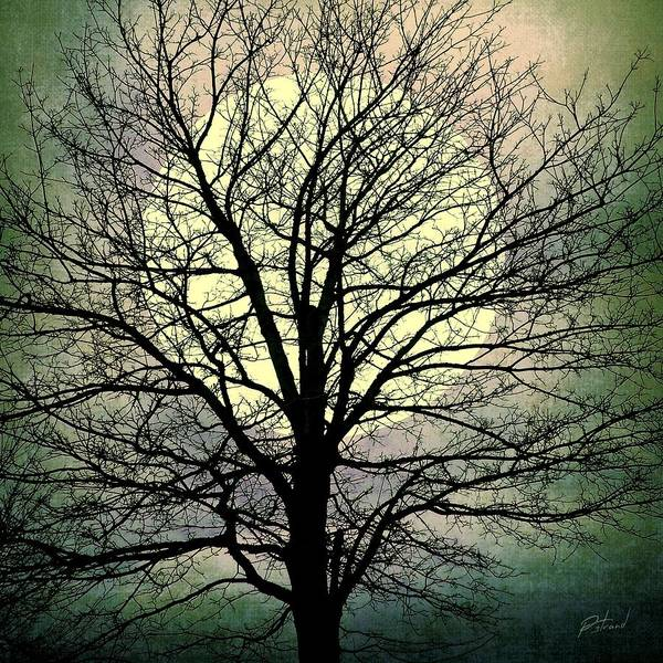 Mixed Media - Winter Moon Silhouette by Patricia Strand