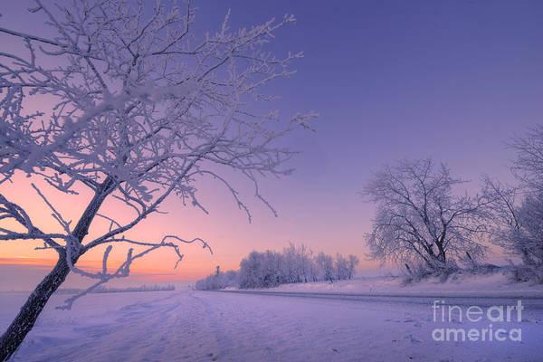 Hoar Photograph - Winter Morning And Hoar Frost by Dan Jurak