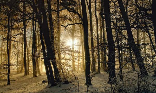 Woods Photograph - Winter Morning by Norbert Maier